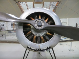 A close up head on look at the Shuttleworth Pup.