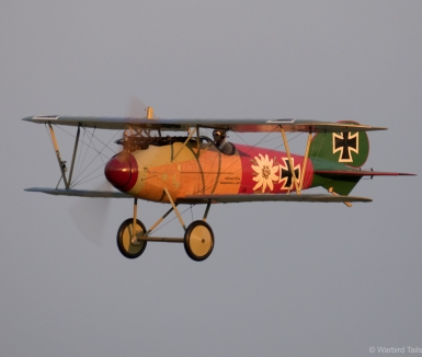 Another look at the beautiful Albatros.