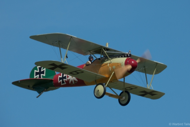 It was good to see the Albatros flying in the daytime on this occasion.