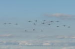 A sight many will remember from years to come. The first pass from the 15 Spitfires and 2 Seafires.